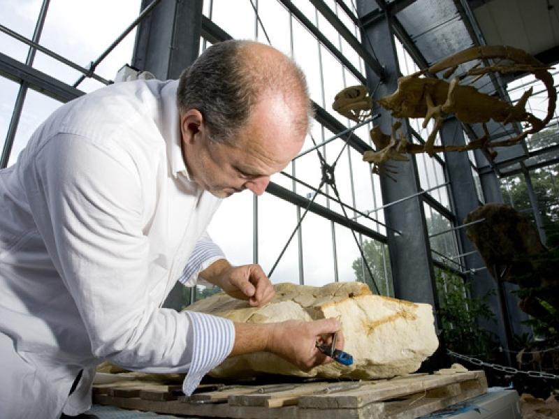 Sjir Renkens die een 66 miljoen jaar oude schilpad prepareert in het Oertijdmuseum te Boxtel