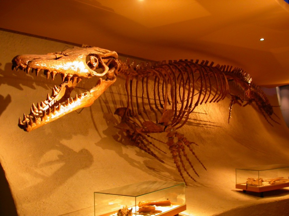 De mosasaurus in het Natuurhistorisch Museum Maastricht