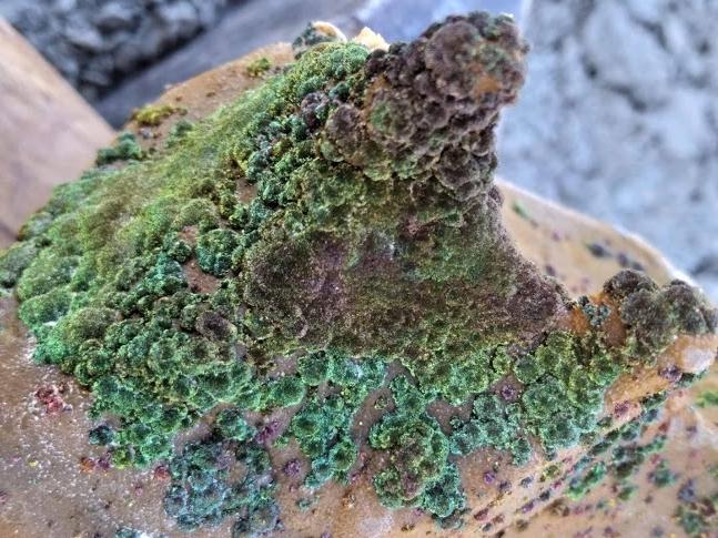 Dennenappelvormig Pyrietknolletje van ongeveer 14cm lengte gevonden door Gerard Mulder.